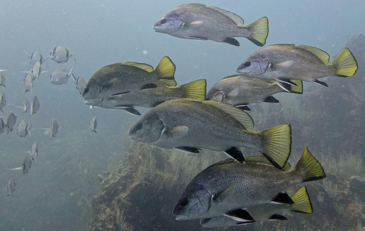 Corbs réserve marine banyuls cerbère