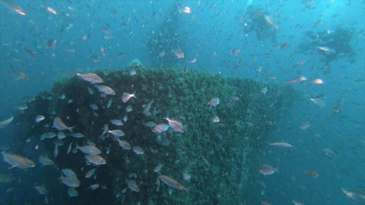 FIPA 2018 - plongée épave