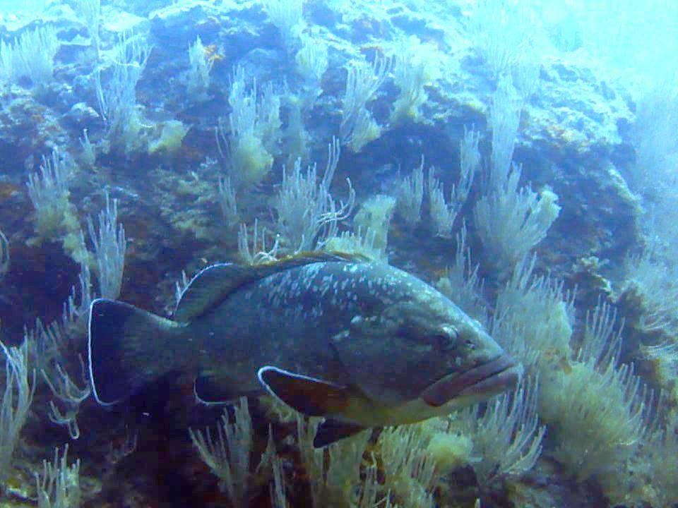 La réserve marine cerbère-banyuls
